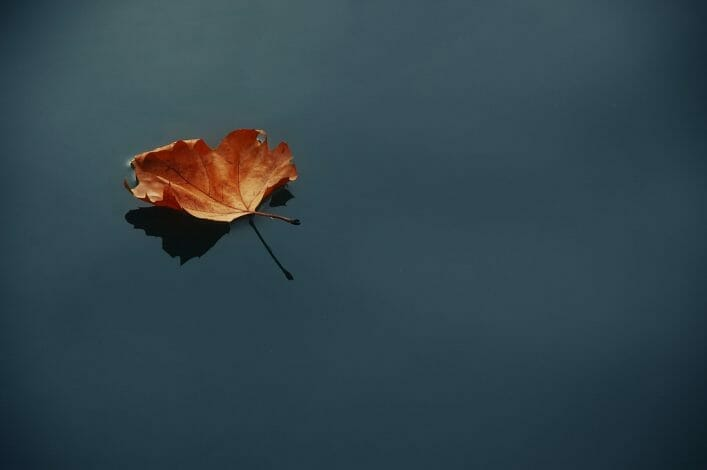 Fall leaf floating on water.